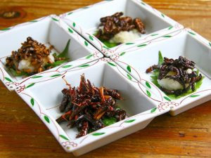 insectes comestible