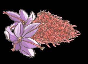 EPISODE 1 : Les colorations capillaires à travers l'histoire