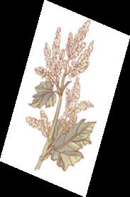 La coloration végétale en 5 leçons. EPISODE 5 : Le cahier de plantes tinctoriales et son nuancier.
