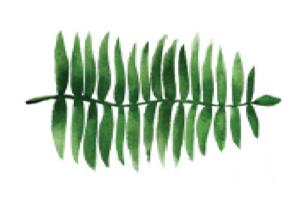 5 bonnes raisons de passer à la coloration végétale avec BIOCOIFF'.