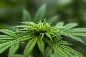 Plantes, une réponse naturelle aux questions de santé.