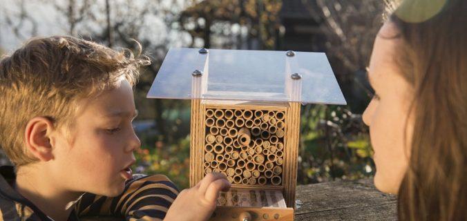 Wildbiene+Partner lance le parrainage abeilles sauvages en France.