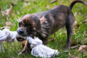 Comment aider vos enfants à éviter les morsures de chien?