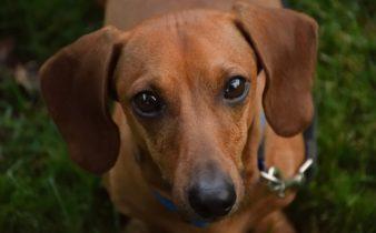 6 façons utiles pour aider votre chien à vivre une vie longue et saine.