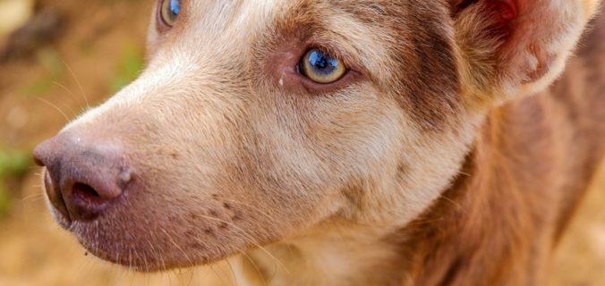 La santé des animaux de compagnie est la priorité n°1.