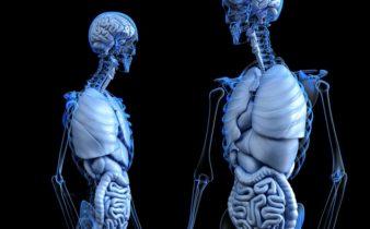 France Biotech invite à un voyage dans le corps humain.