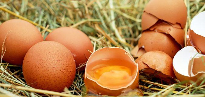 Voici pourquoi les œufs sont la nourriture la plus saine sur la planète.