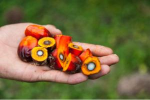 L'huile de palme ROUGE Emile Noël: BIO & Responsable à utiliser au quotidien.