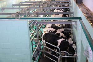 Pourquoi les produits laitiers sont-ils inflammatoires ?