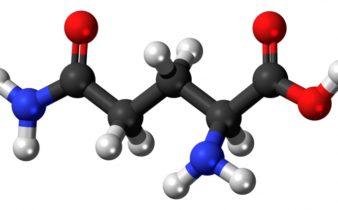 Pourquoi les hommes ont besoin œstrogène?