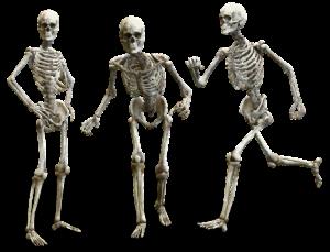 Comment construire des os solides ?