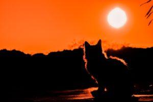 Comment le soleil est absolument crucial pour votre santé
