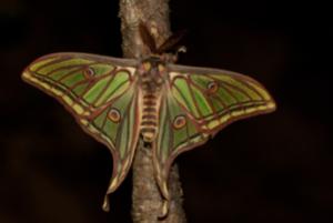 Le Sentier des Papillons : admirer des centaines de papillons à ciel ouvert.