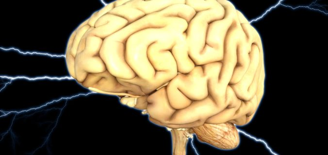 Tout savoir sur le cerveau