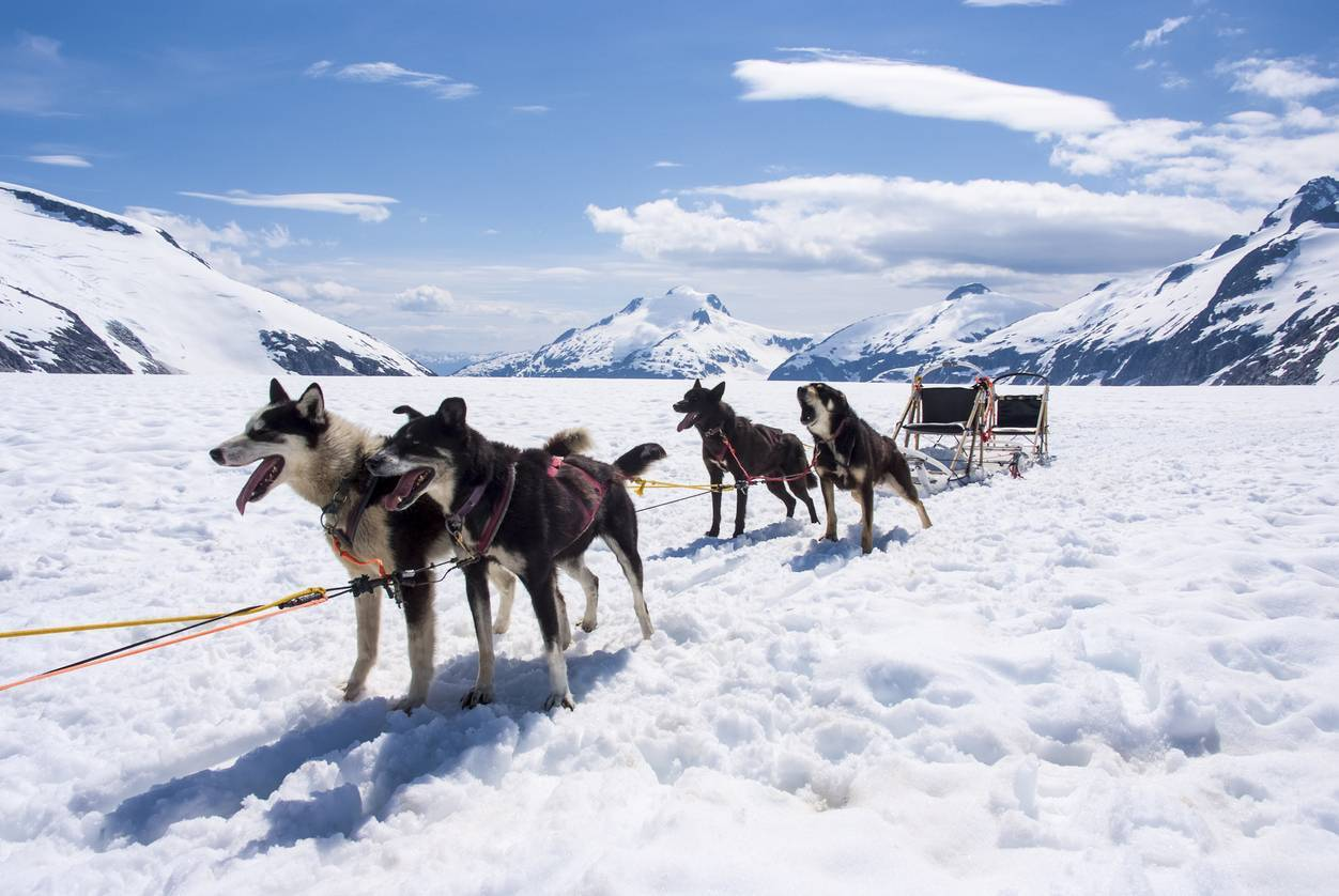 balade chiens de traîneaux Pourquoi s'évader au cœur de la nature pour son bien-être ?