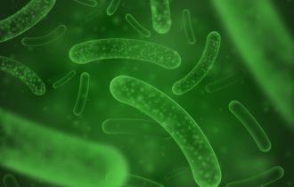 Qu'est-ce que les probiotiques