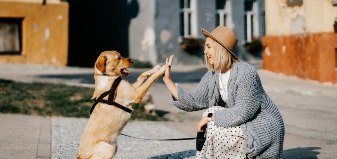 Dépression - Les animaux domestiques peuvent-ils aider à la traiter?