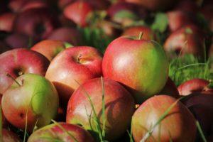 Pourquoi les pommes sont-elles bonnes pour vous