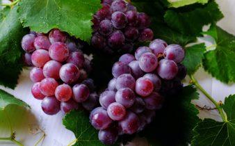 Principaux avantages pour la santé des raisins