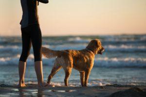 Posséder un chien : de surprenants bienfaits