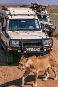 Un road trip en famille pour visiter la Namibie