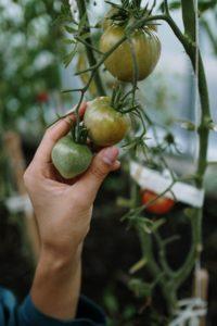 Comment cultiver en utilisant des méthodes biologiques?