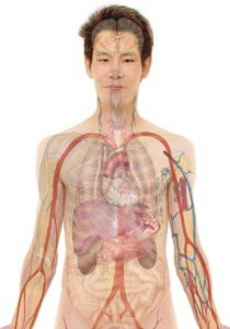Présentation de votre système immunitaire